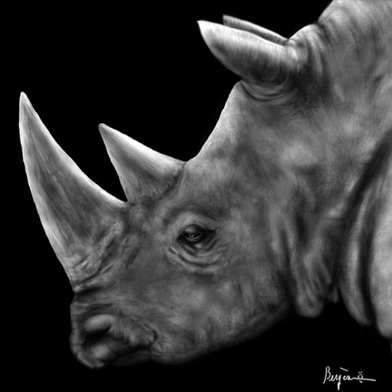 rhinoceros profile