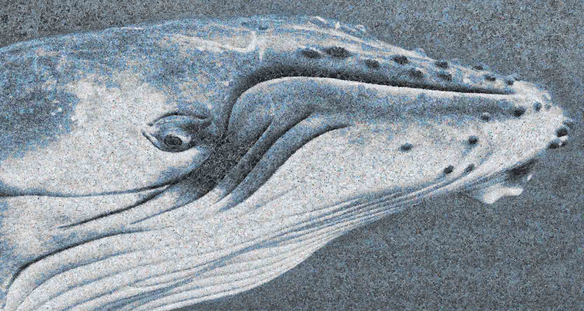 blue whale profile