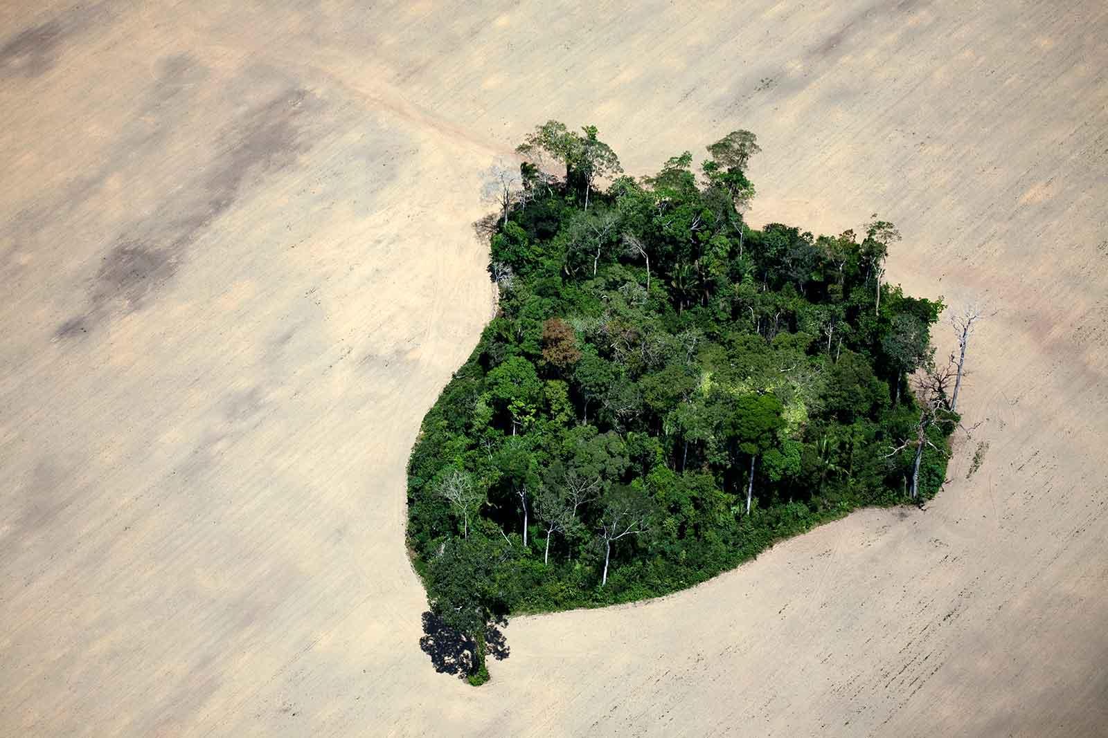 deforested amazon land