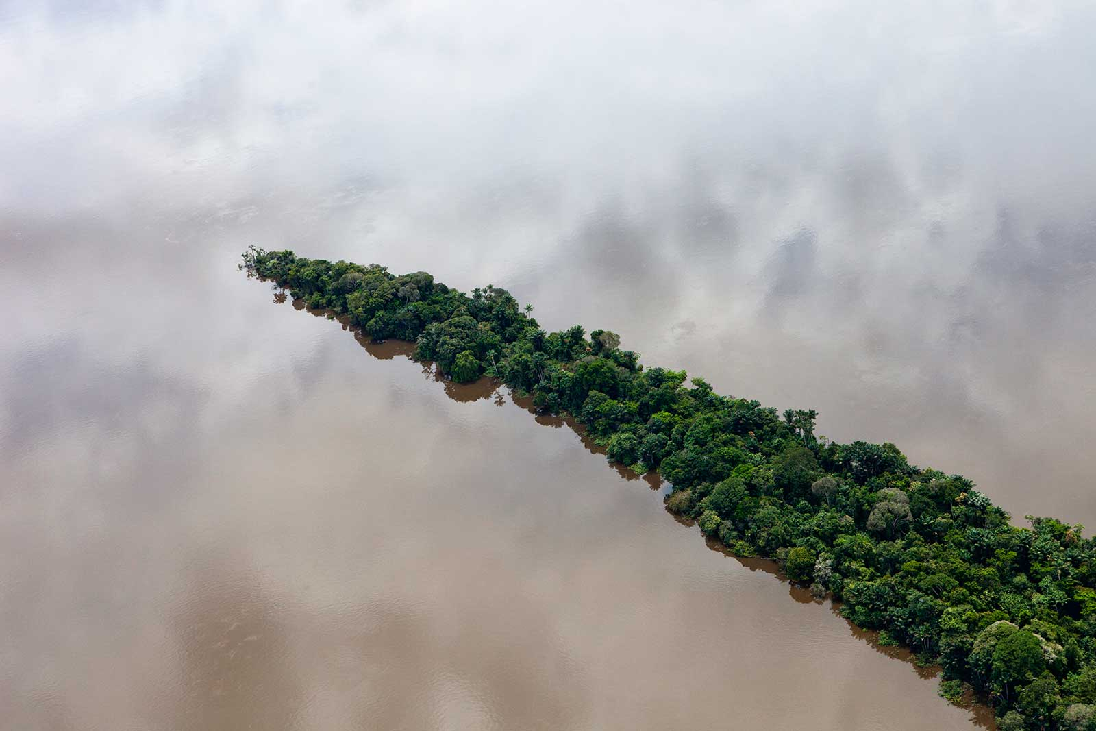 rainforest trees projecting into body of water