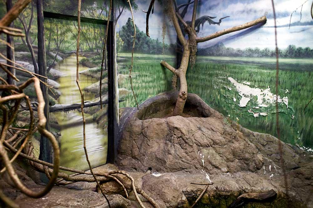 zoo enclosure painted to resemble natural environment