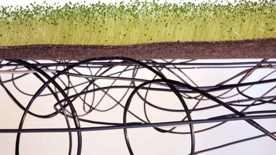 chia garden on top of black tubing