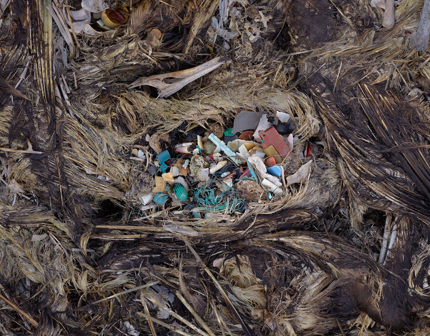 dead baby albatross carcass with plastic trash in stomach