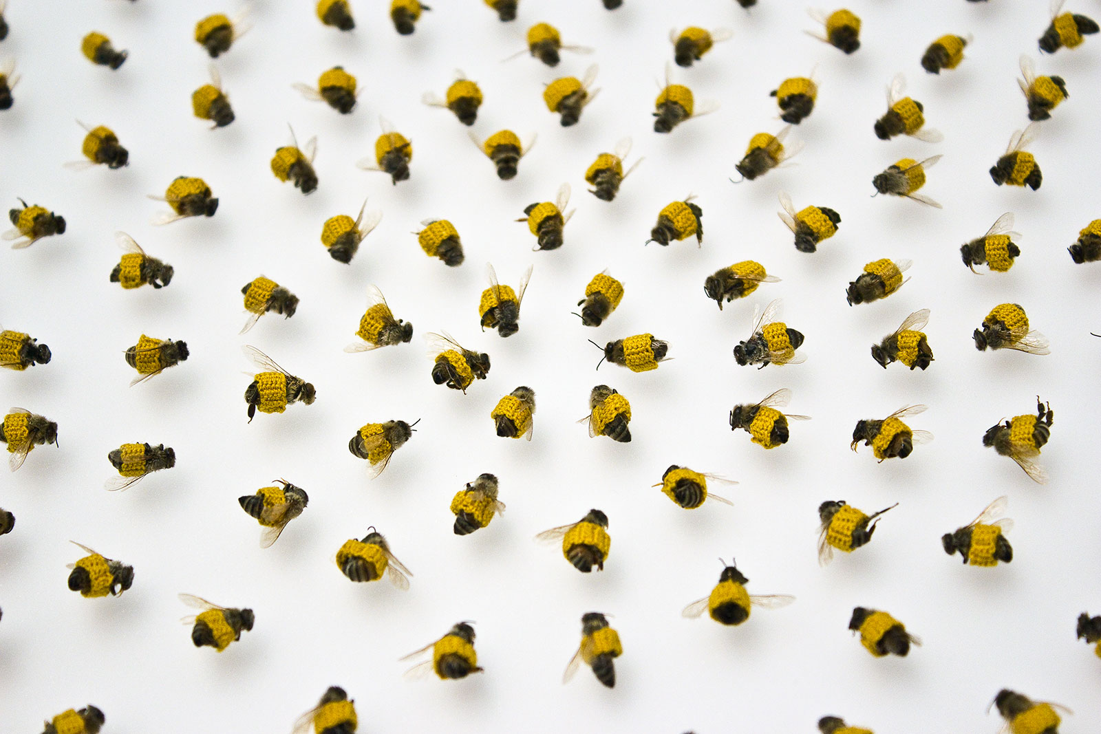 bees with knit coverings