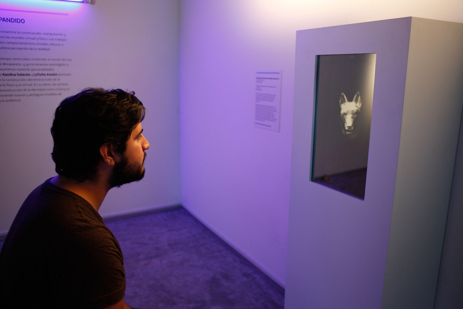 man looking at interactive video of animated goat